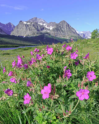 Photograph - Geraniums In Many Glacier by Jack Bell