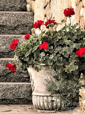 Photograph - Geraniums by Janice Drew