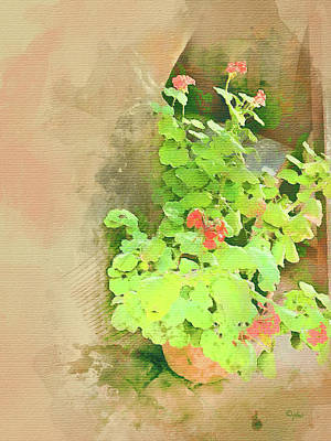 Digital Art - Geraniums - Old Salem by Paulette B Wright