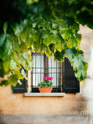 Print featuring the photograph Geraniums On Windowsill by Silvia Ganora