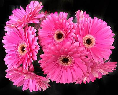 Photograph - Gerber Daisies by Anne Sands
