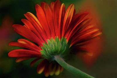 Gerber Daisy Mixed Media - Gerber Red by Terry Davis