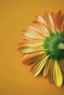 Photograph - Gerbera Back by Carlos Caetano
