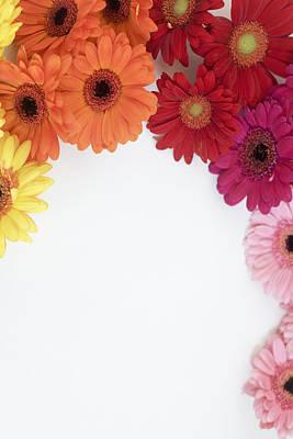 Photograph - Gerbera Blooms Framed by Di Kerpan