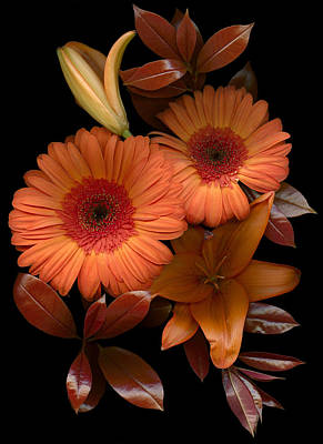 Orange Photograph - Gerbera Cluster by Marsha Tudor