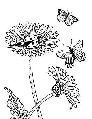 Drawing - Gerbera Daisies Drawing by Irina Sztukowski