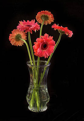 Photograph - Gerbera Daisy Bouquet by Jean Noren