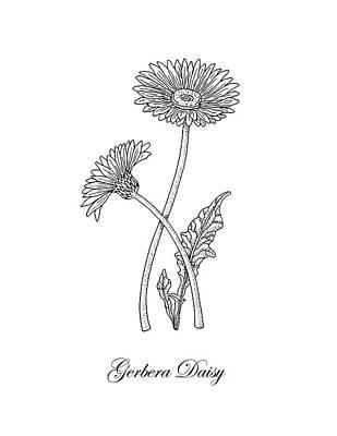 Floral Drawings - Gerbera Daisy Flower Botanical Drawing  by Irina Sztukowski