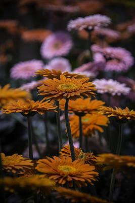 Gerbera Photograph - Gerbera Daisy Garden by Garry Gay