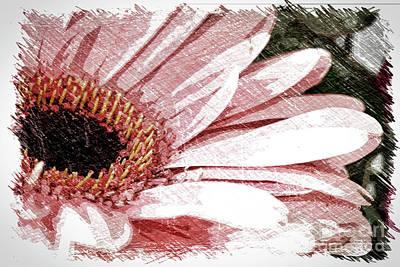 Digital Art - Gerbera Daisy In Pink by Linda Joyce