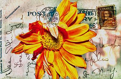 Photograph - Gerbera Daisy On Vintage 1936 Postcard by Nina Silver