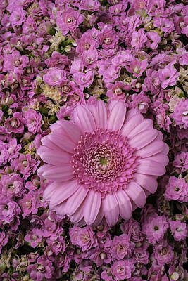 Gerbera Daisy Photograph - Gerbera Daisy With Kalanchoe Flowers by Garry Gay