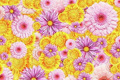 Gerbera Flowers Print by Vadim Goodwill