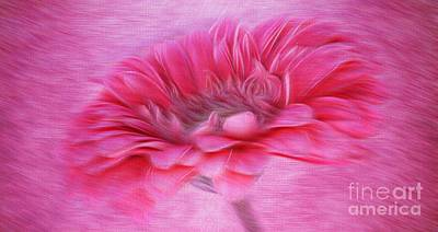 Gerbera Daisy Photograph - Gerbera In The Breeze by Clare Bevan