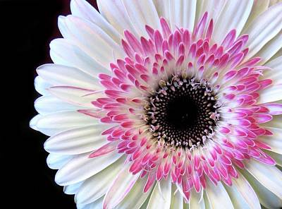 Macro Digital Art - Gerbera by Jessica Jenney
