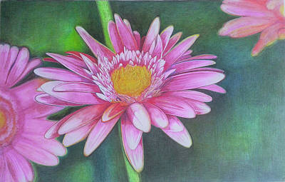 Gerbera Drawing - Gerbera by Marijan Trut