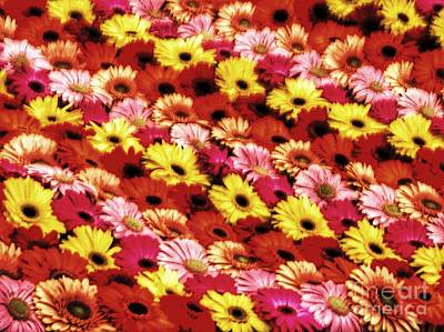 Photograph - Gerbera Pattern by Joan-Violet Stretch