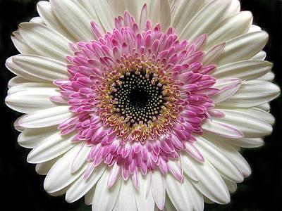 Macro Digital Art - Gerbera Petals by Jessica Jenney