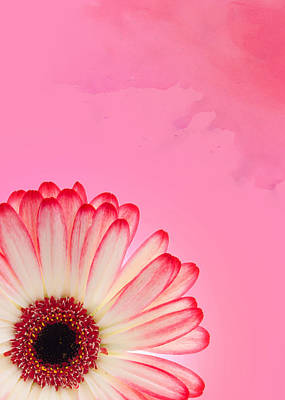 Pink Photograph - Gerbera Pink by Mark Rogan