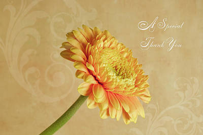 Photograph - Gerbera Thank You Card by Sandra Foster