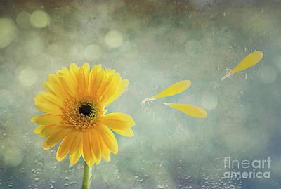 Gerbera With Raindrops Art Print by Amanda Elwell