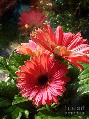 Photograph - Gerberas In Coral Pink by Joan-Violet Stretch