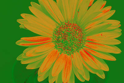 Digital Art - Gerbia Daisy Sabattier by Bill Barber