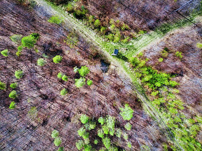 Photograph - German Forest In April Aerial View by Matthias Hauser