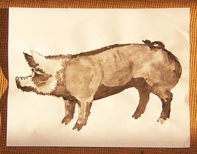 Photograph - German Pietrain Boar 31 by Larry Campbell