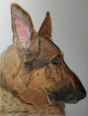 Drawing - German Shepherd by Anita Putman