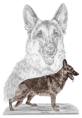 Drawing - German Shepherd Art Print - Color Tinted by Kelli Swan