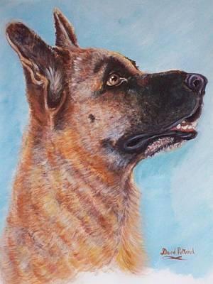 German Shepherd Original by David Putland