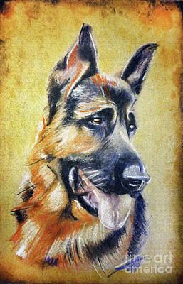 Drawing - German Shepherd Dog Drawing by Daliana Pacuraru
