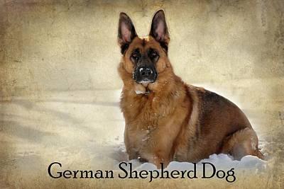 Photograph - German Shepherd Dog In Winter - Textured by Angie Tirado