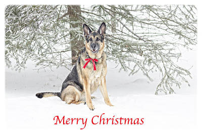 Photograph - German Shepherd Dog Merry Christmas by Donna Doherty