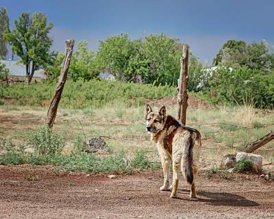 Photograph - German Shepherd by Nikolyn McDonald