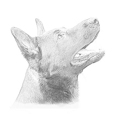 German Shepherd Profile Art Print by Christean Ramage
