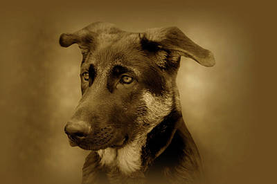 Photograph - German Shepherd Pup by Sandy Keeton