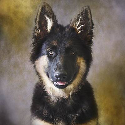 German Shepherd Puppies Photograph - German Shepherd Puppy Portrait by Wolf Shadow  Photography
