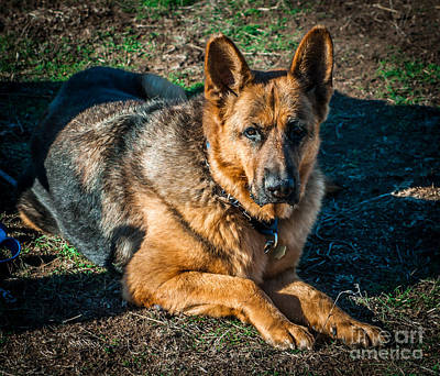 Photograph - German Shepherd Sonoma Coast by Blake Webster