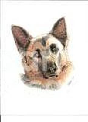 Drawing - German Shepherd by Bill Hubbard