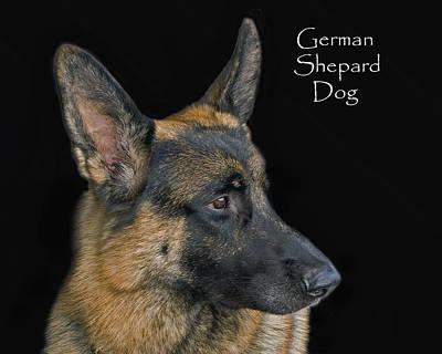 German Shhepard Dog Art Print by Larry Linton