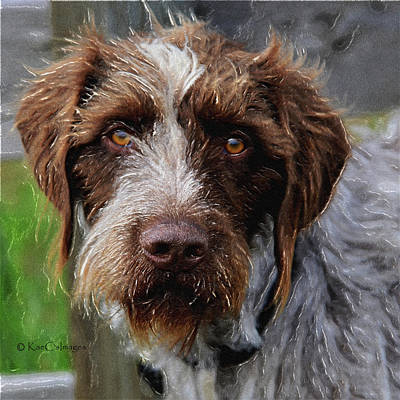 Mixed Media - German Wirehaired Pointer  by Kae Cheatham