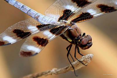 Photograph - Get A Grip Dragonfly Close Up Art by Reid Callaway