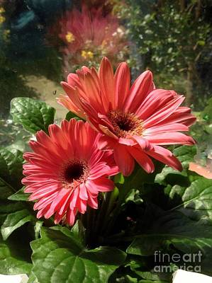 Photograph - Gerberas In Coral Pink 2 by Joan-Violet Stretch