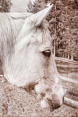 Photograph - Get My Good Side, Please by Kay Brewer