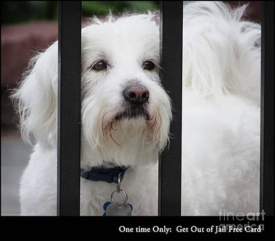 Puppy Mixed Media - Get Out Of Jail Free Card by Ella Kaye Dickey