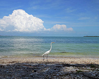 Photograph - Get Out Of My Way Or You'll Egret It. Sanibel Island Egret Fort Myers Florida by Toby McGuire