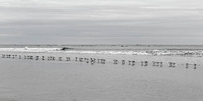 Get Your Ducks In A Row Art Print by Betsy Knapp