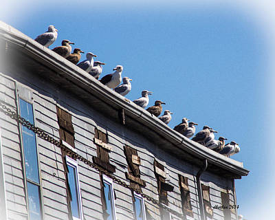 Photograph - Get Your Gulls In A Row by Dick Botkin